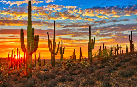 The New York Times Features Tucson: The City That Encourages You to Explore